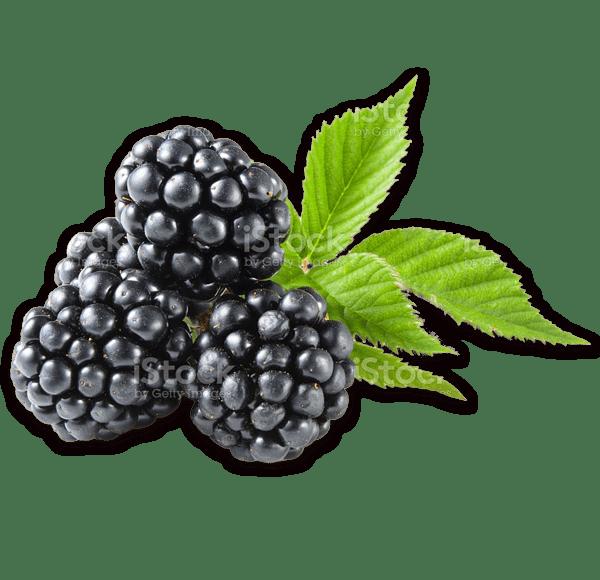 blackberry - Fresh Farm Produce & Family Fun