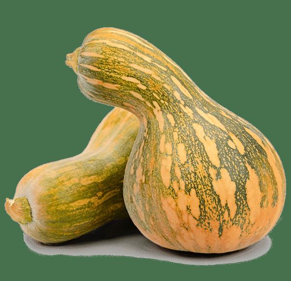 gourd 1 - Fresh Farm Produce & Family Fun