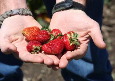 strawberries hands 400x284 - Gallery