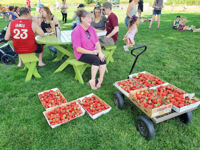 strawberry-picking